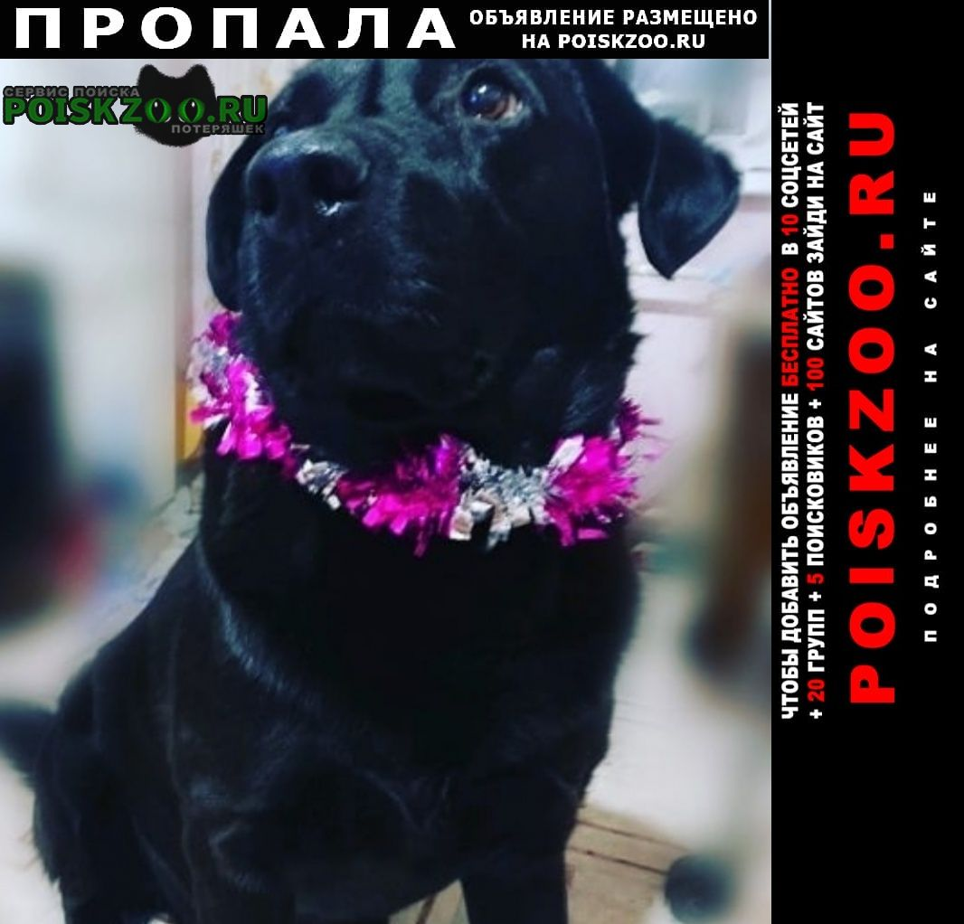 Пропала собака кобель Хабаровск