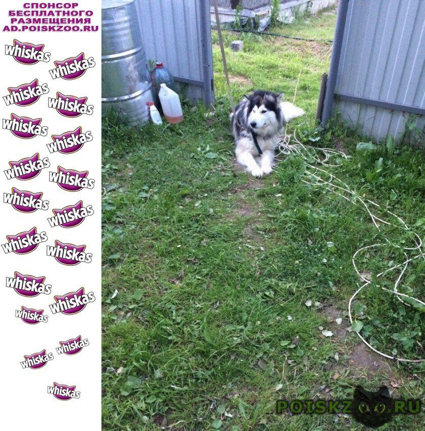 Пропала собака убежала в селе богослово г.Владимир