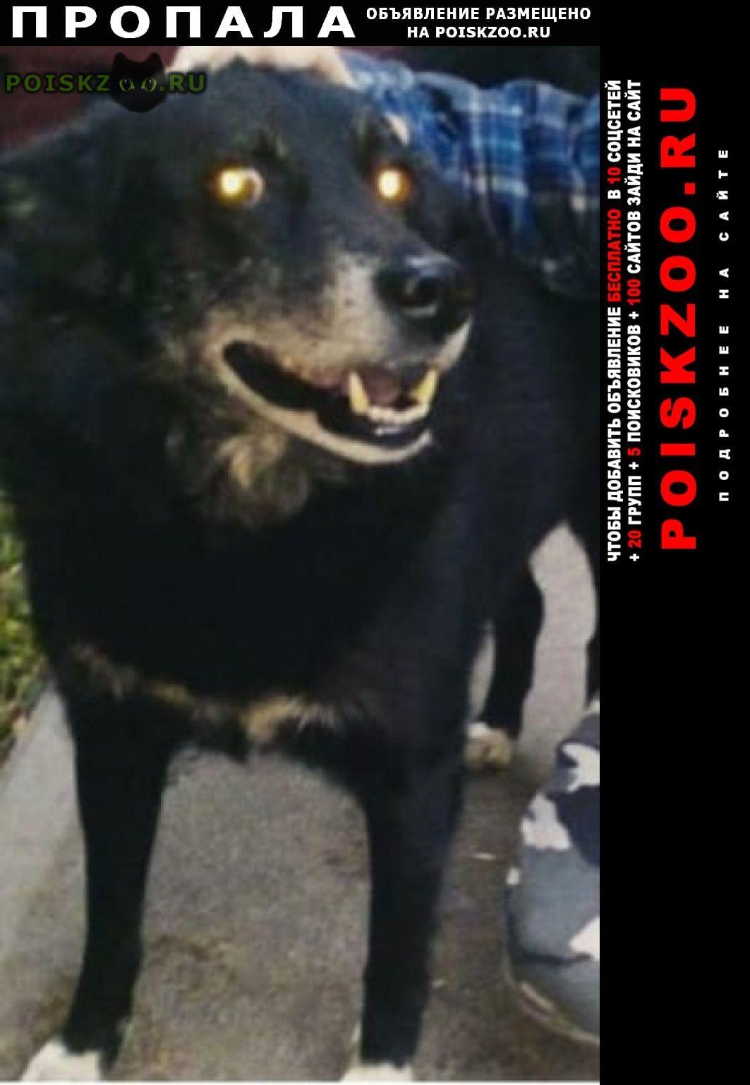 Пропала собака кобель пёс г.Санкт-Петербург