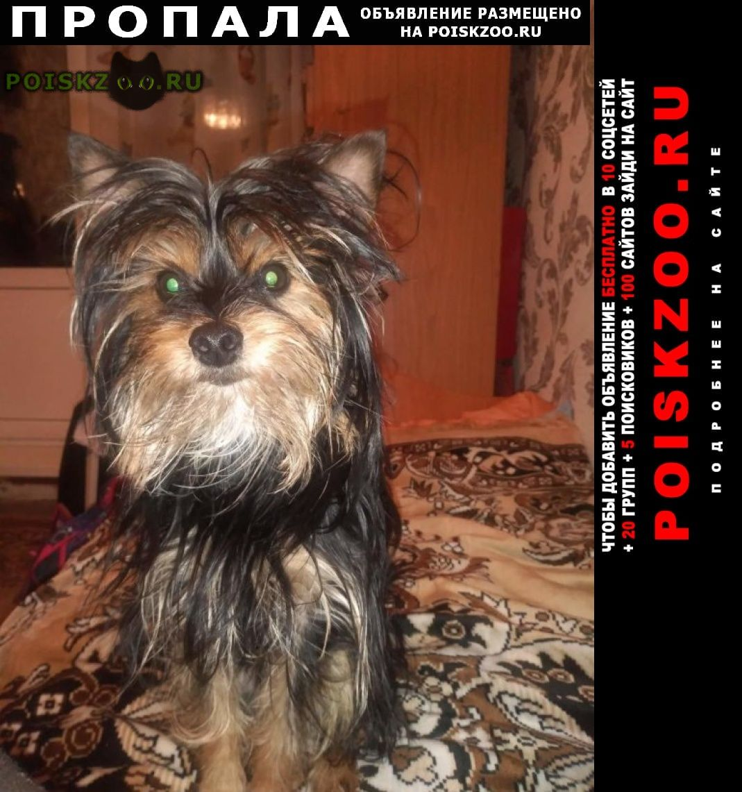 Пропала собака кобель г.Бийск