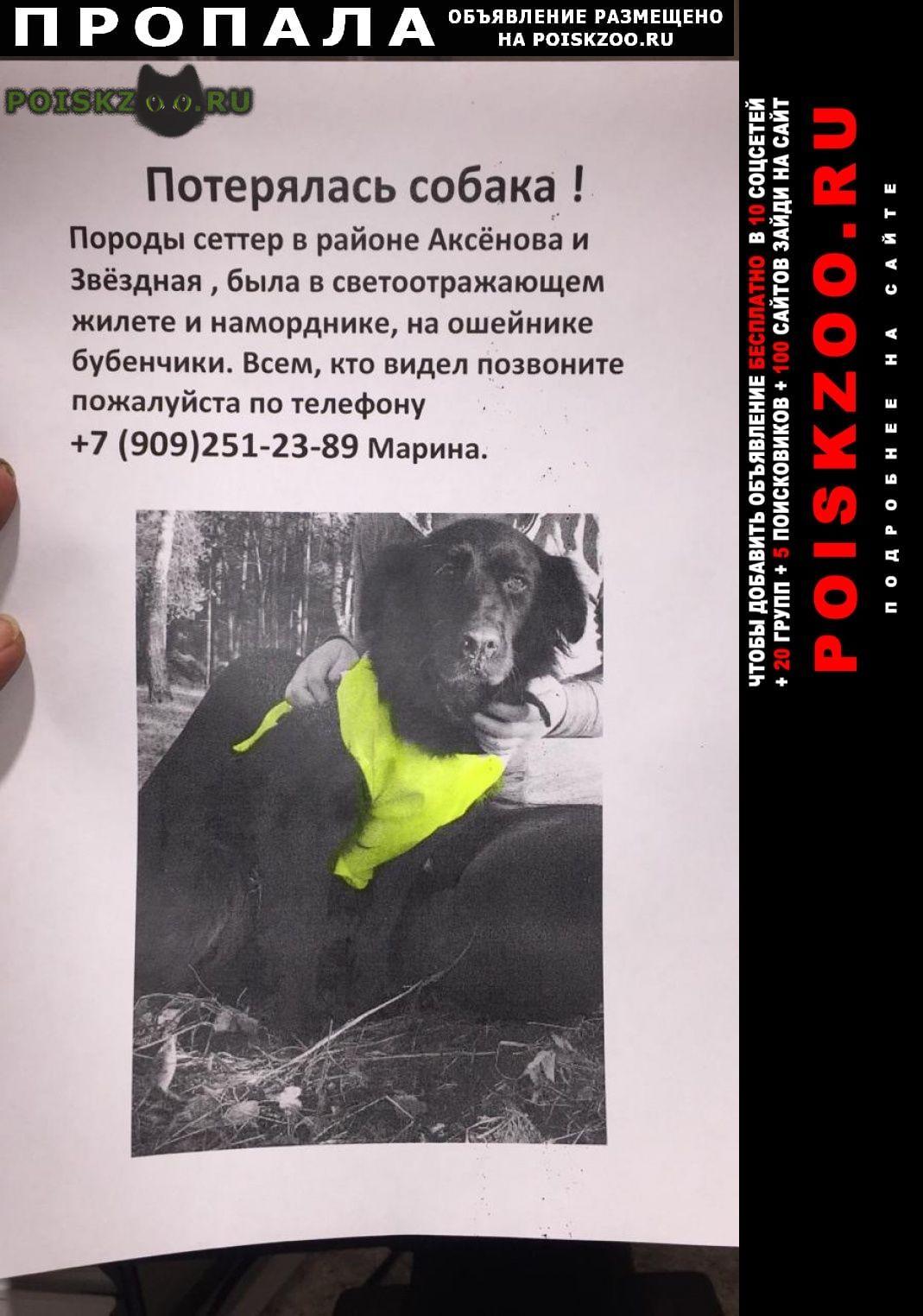 Пропала собака г.Обнинск
