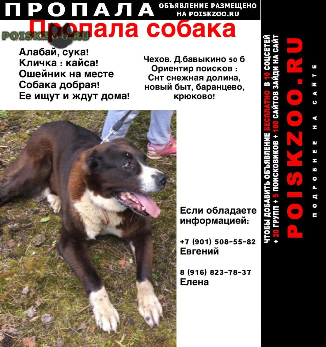 Пропала собака г.Чехов
