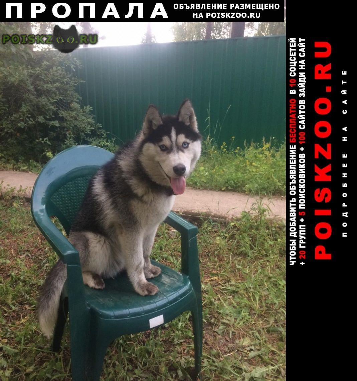 Пропала собака кобель г.Ильинский (Московская обл.)