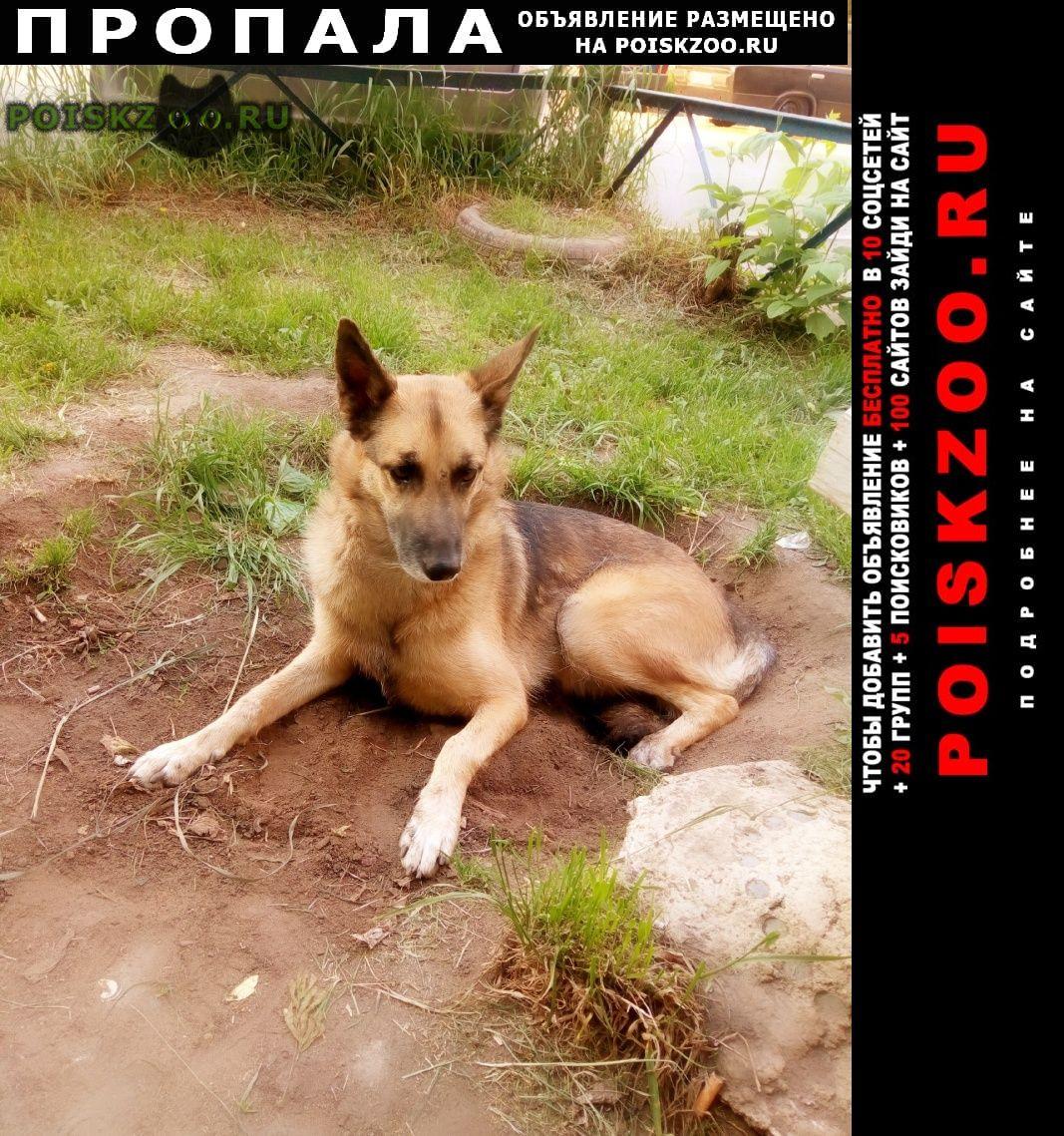 Пропала собака г.Красноярск