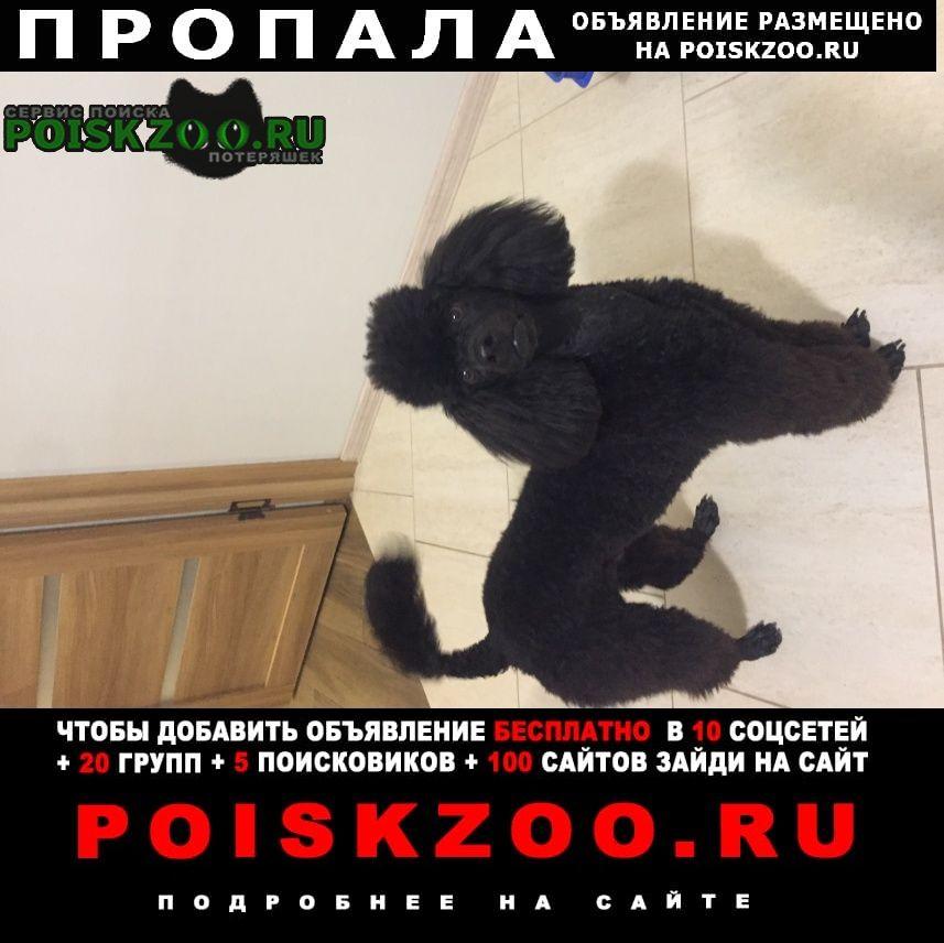 Курск Пропала собака