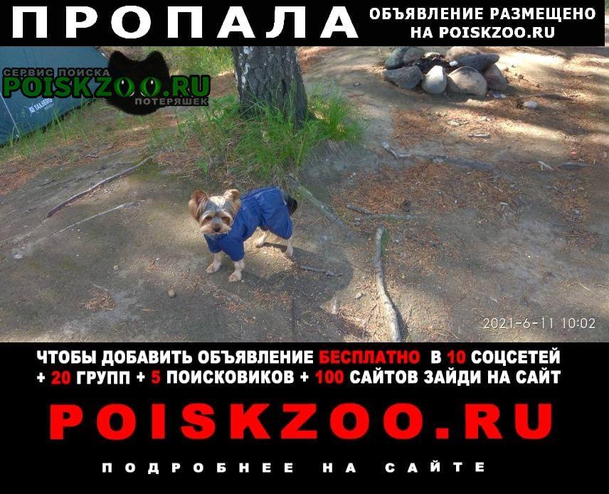 Пропала собака кобель Нижневартовск