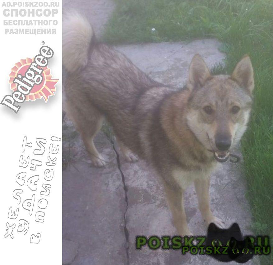 Пропала собака #; #; г.Зеленоград