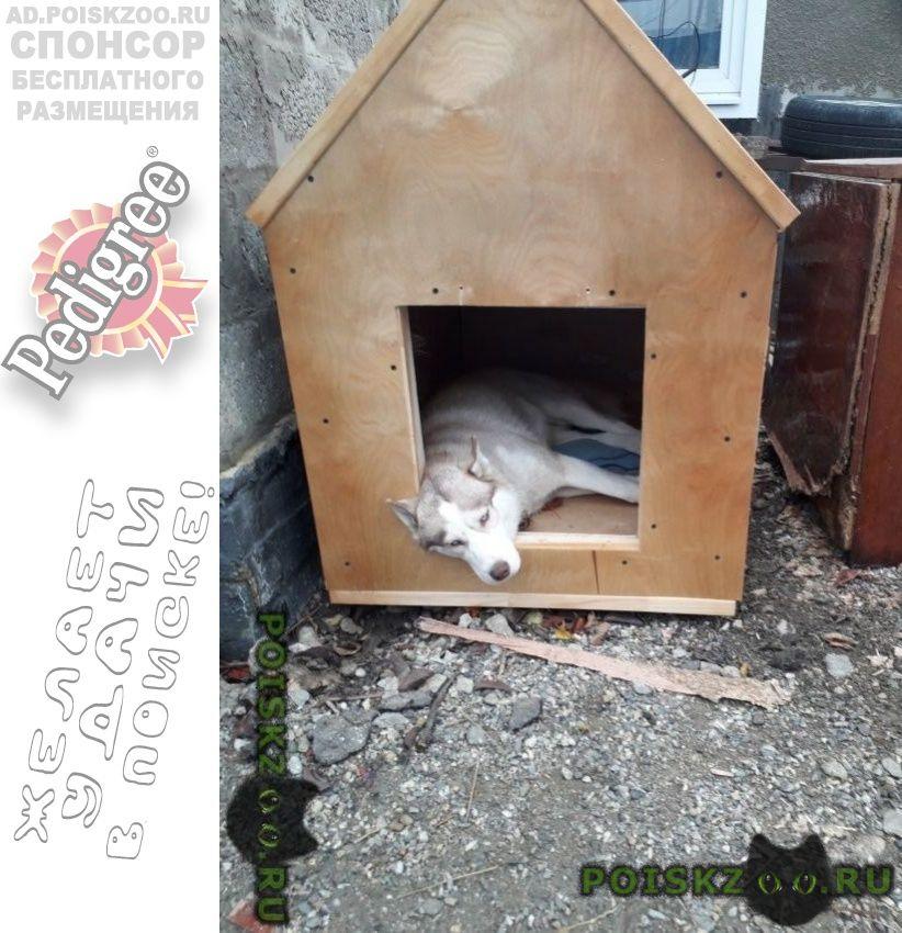 Пропала собака г.Ставрополь