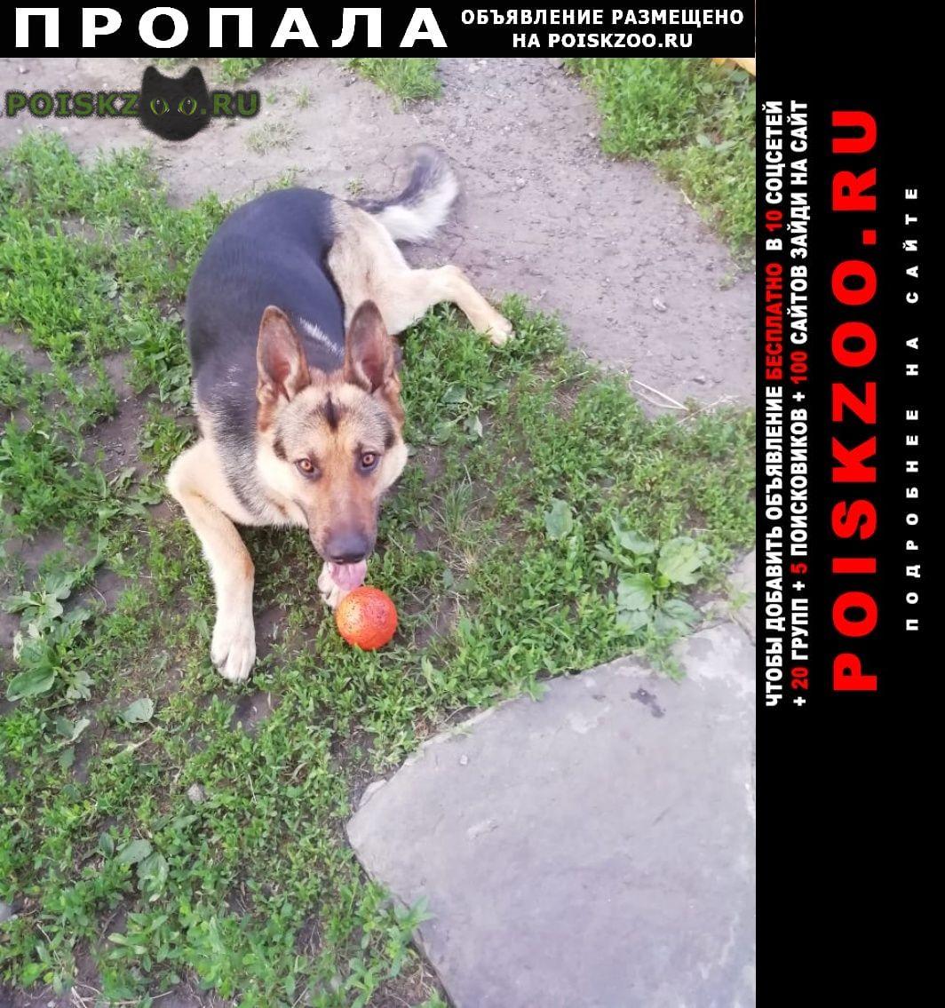 Пропала собака кобель г.Курган