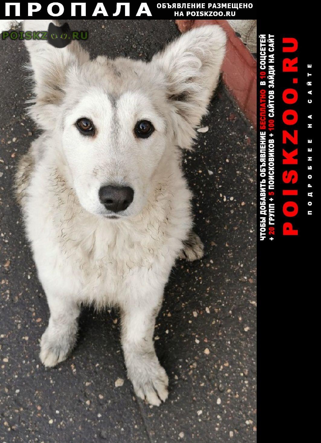 Пропала собака очаково-матвеевский р-н г.Москва