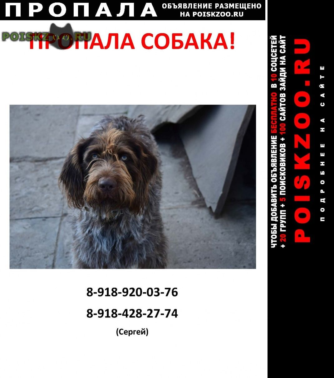 Пропала собака г.Майкоп (Адыгея)
