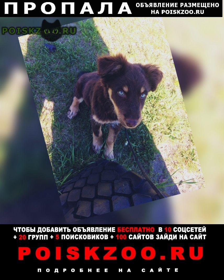 Пропала собака г.Курган