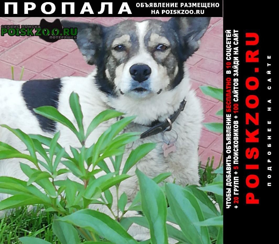 Пропала собака Ижевск