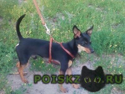 Пропала собака кобель помогите найти  г.Воронеж