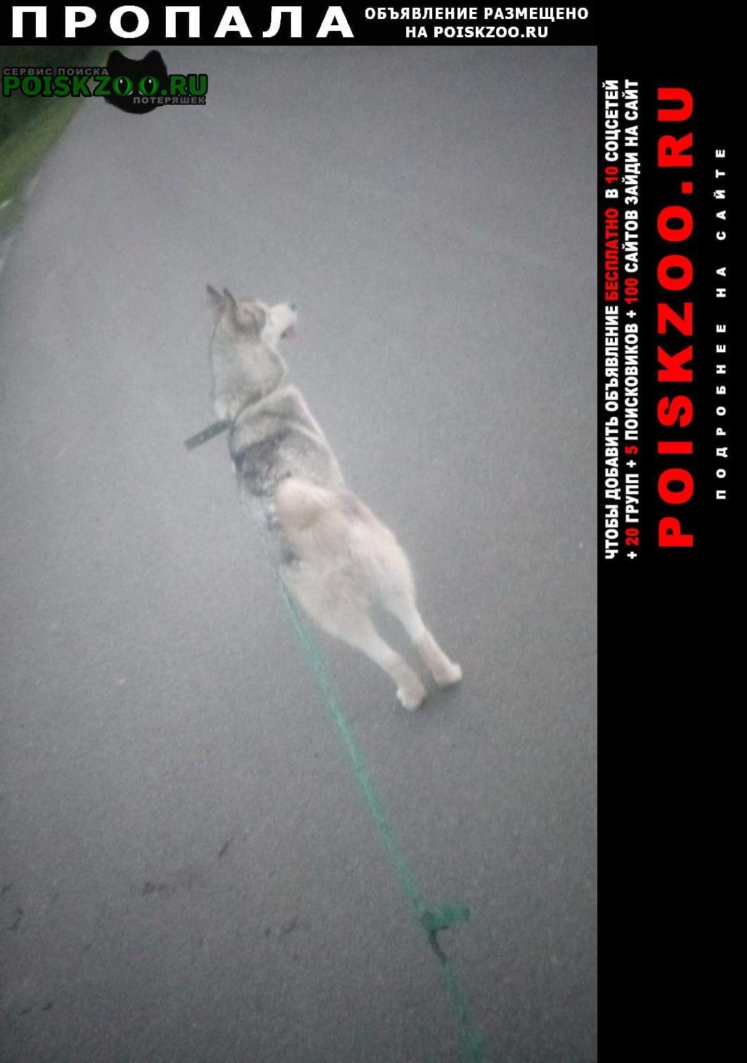 Старый Оскол Пропала собака