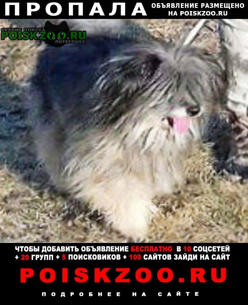 Пропала собака метис русской цветной болонки(украден) Пущино