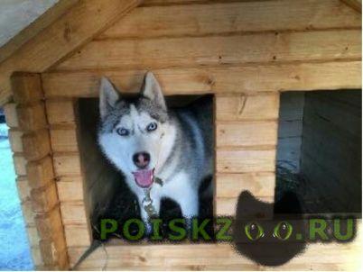 Пропала собака г.Новороссийск