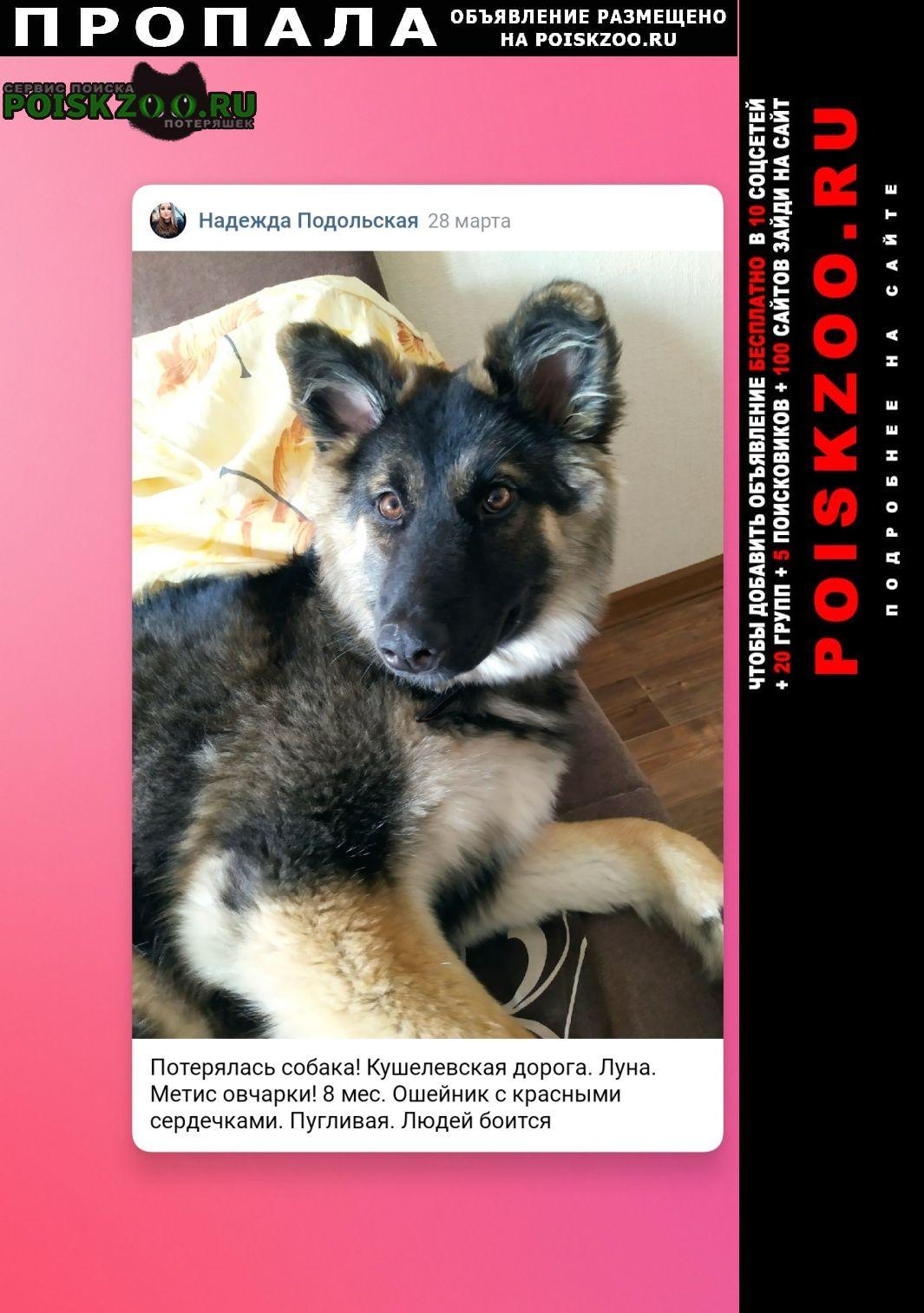 Пропала собака луна, найдись Санкт-Петербург