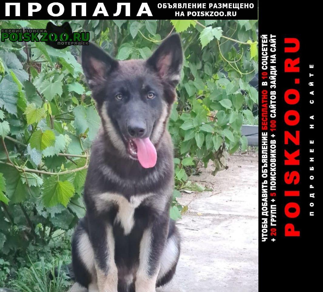 Пропала собака кобель черный длинношертный метис Бронницы