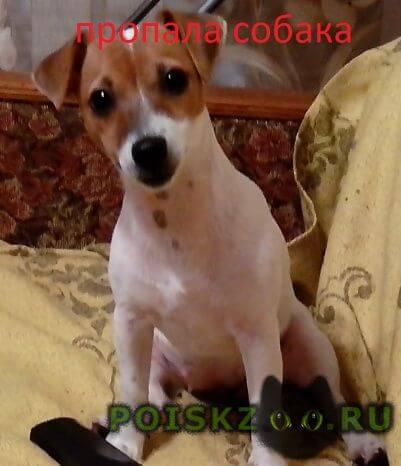 Пропала собака в е джек рассел г.Краснодар