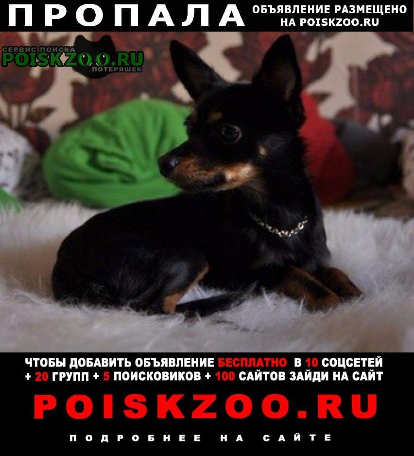 Пропала собака кобель помогите вернуть домой Нижние Серги