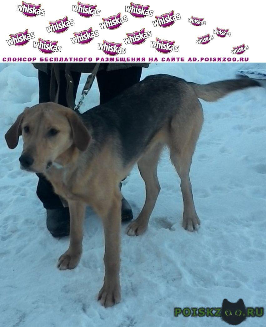 Пропала собака кобель г.Рыбинск