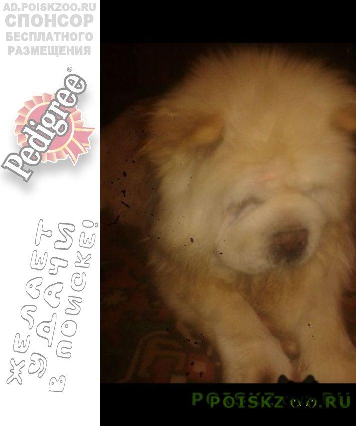 Пропала собака г.Первоуральск