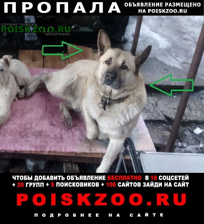 Пропала собака кобель выбежал за ворота. Калининград (Кенигсберг)