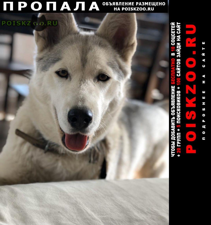 Пропала собака вознаграждение г.Дмитров