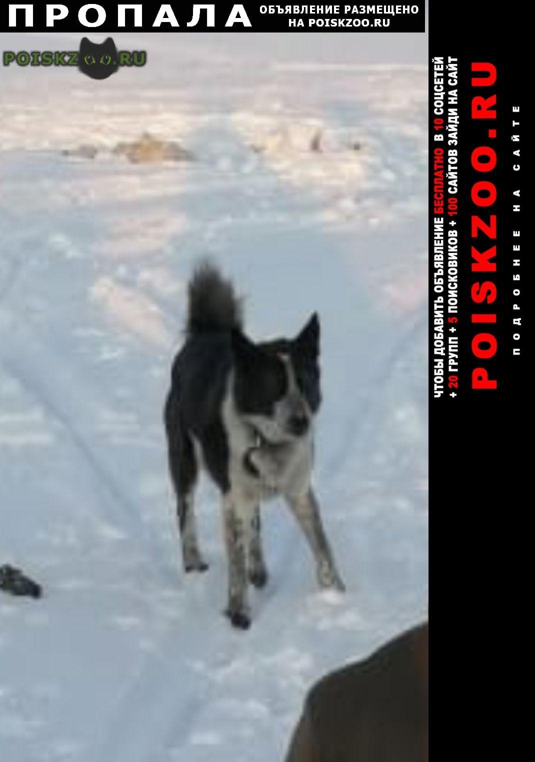 Пропала собака кобель г.Ноябрьск