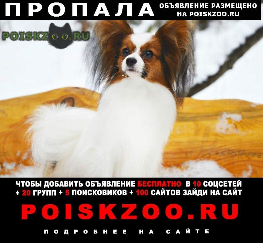 Пропала собака, район протасы. г.Пермь