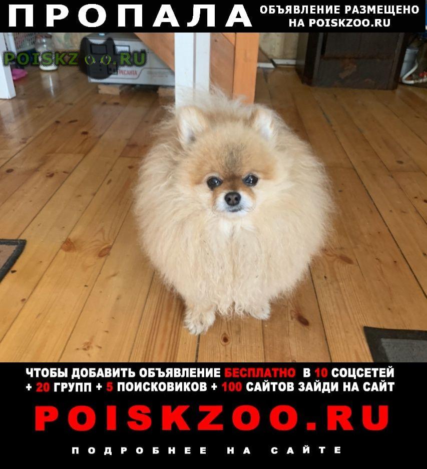 Пропала собака кобель помогите найти г.Санкт-Петербург