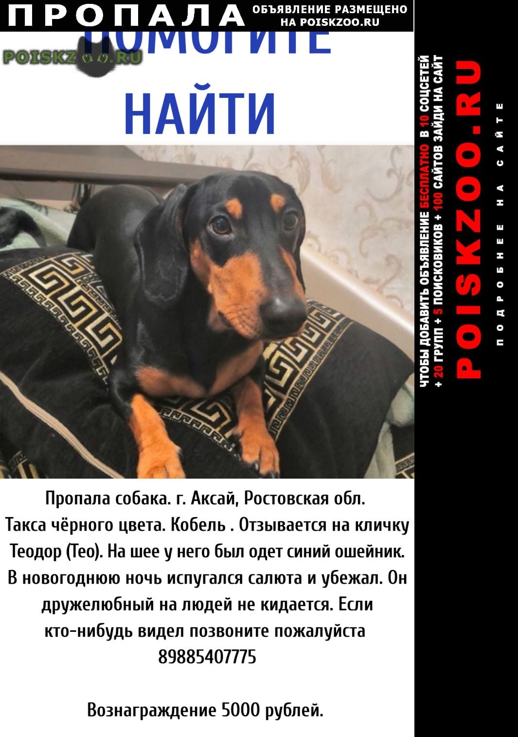 Пропала собака кобель такса г.Аксай (Ростовская обл.)