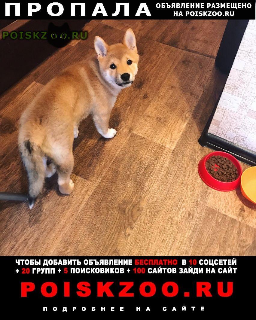 Пропала собака г.Видное