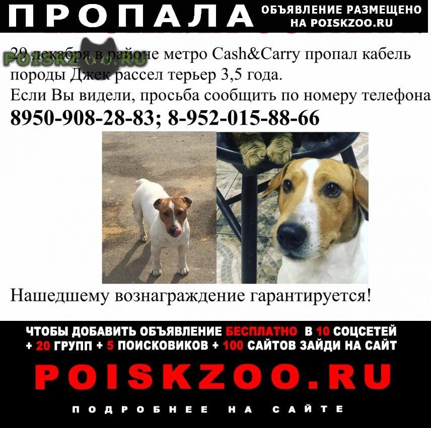 Пропала собака кобель  г.Тула