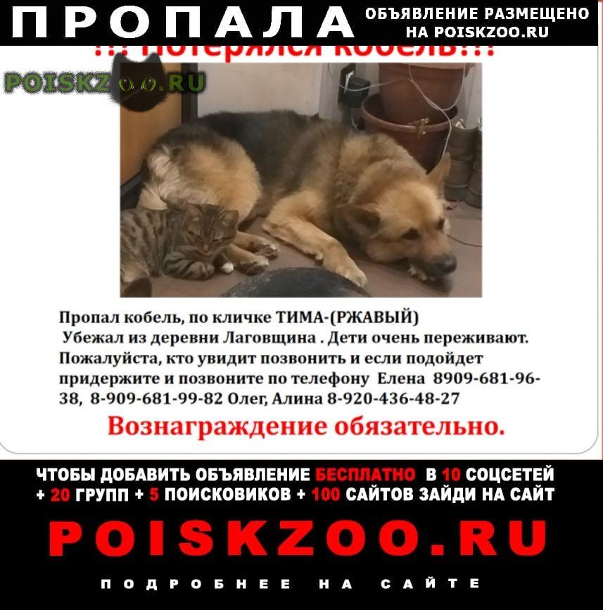Пропала собака кобель ищем тиму 24 октября г.Кремёнки