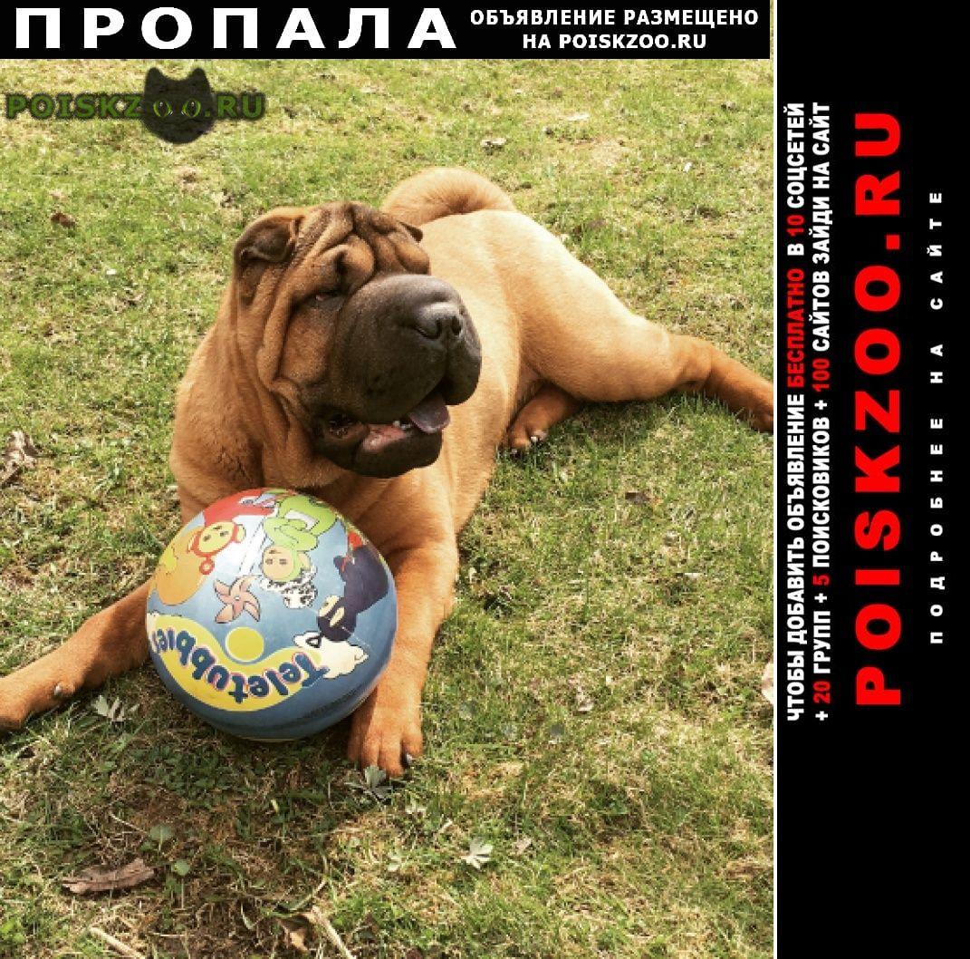 Пропала собака нашедшему вознаграждение г.Домодедово