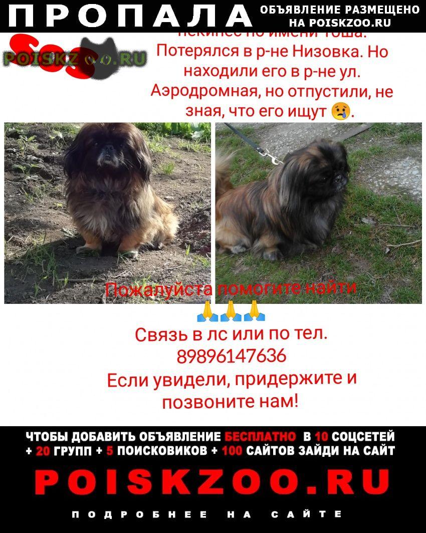 Пропала собака кобель.. г.Сальск