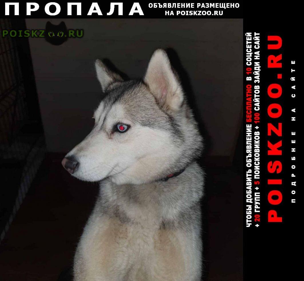 Пропала собака хаски Москва