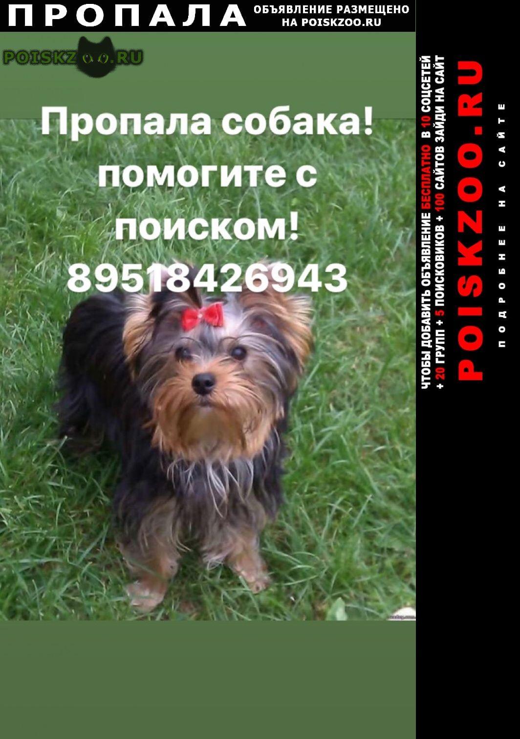 Пропала собака кобель вознаграждение гарантируется г.Батайск