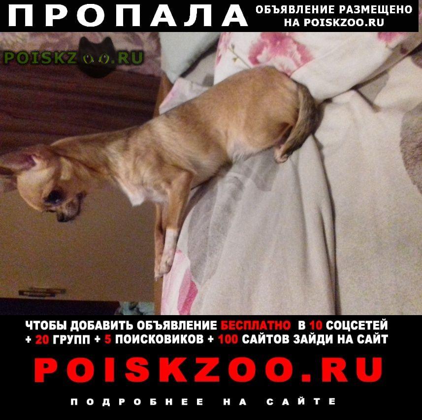 Пропала собака помогите найти г.Новороссийск