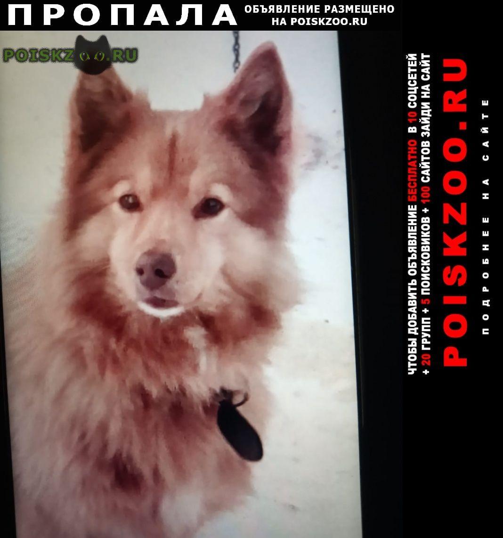 Пропала собака кобель тимка г.Алексин