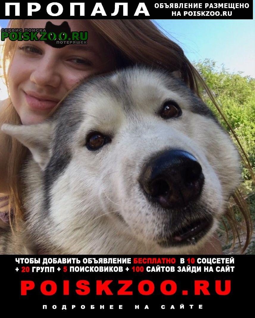 Пропала собака кобель Чапаевск