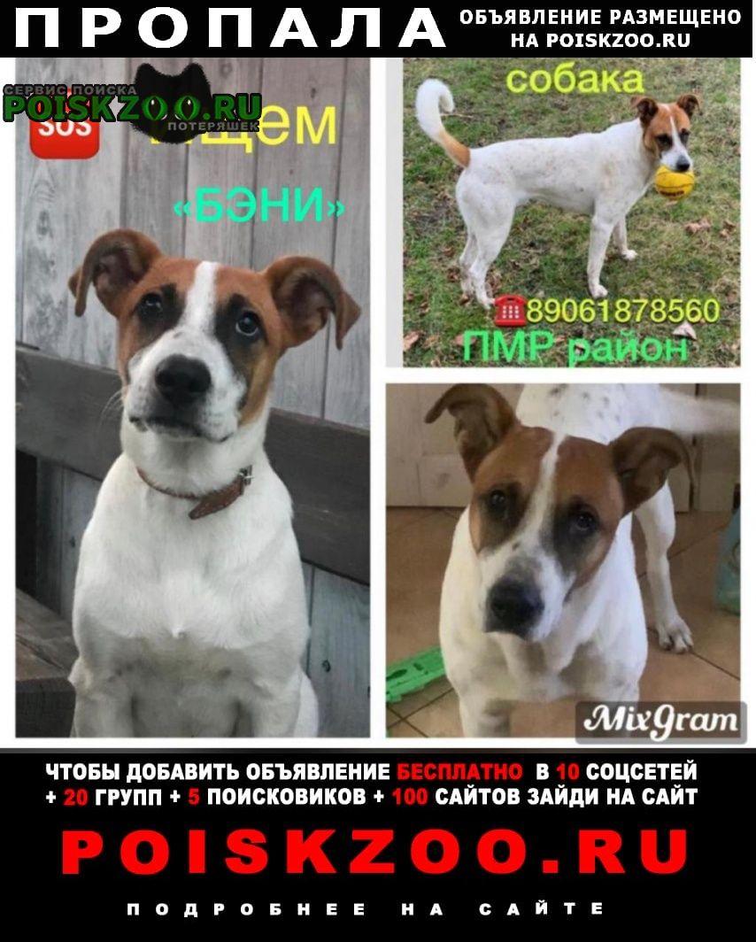 Пропала собака кобель «пёс бэни» Краснодар