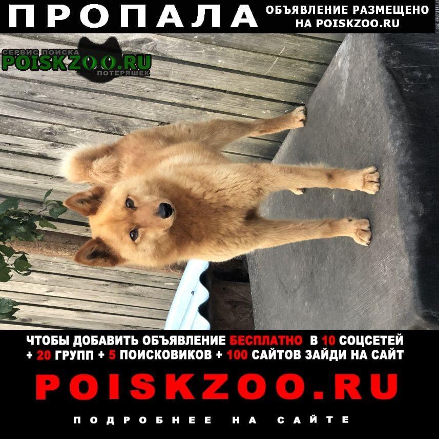 Спасск-Рязанский Пропала собака