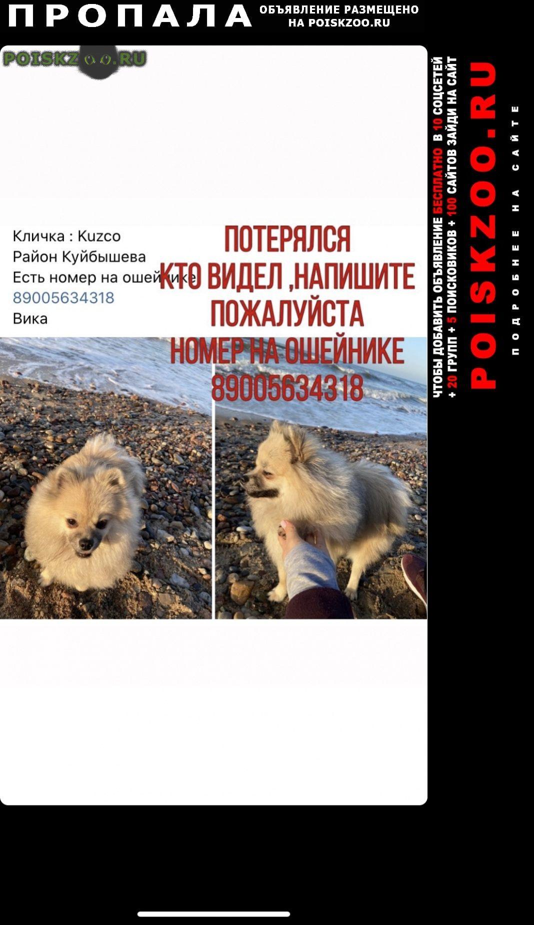 Пропала собака за вознаграждение г.Калининград (Кенигсберг)