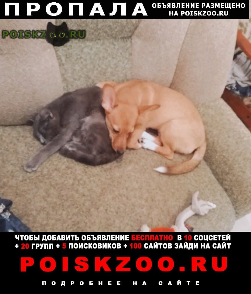 Пропала собака.. г.Новокузнецк