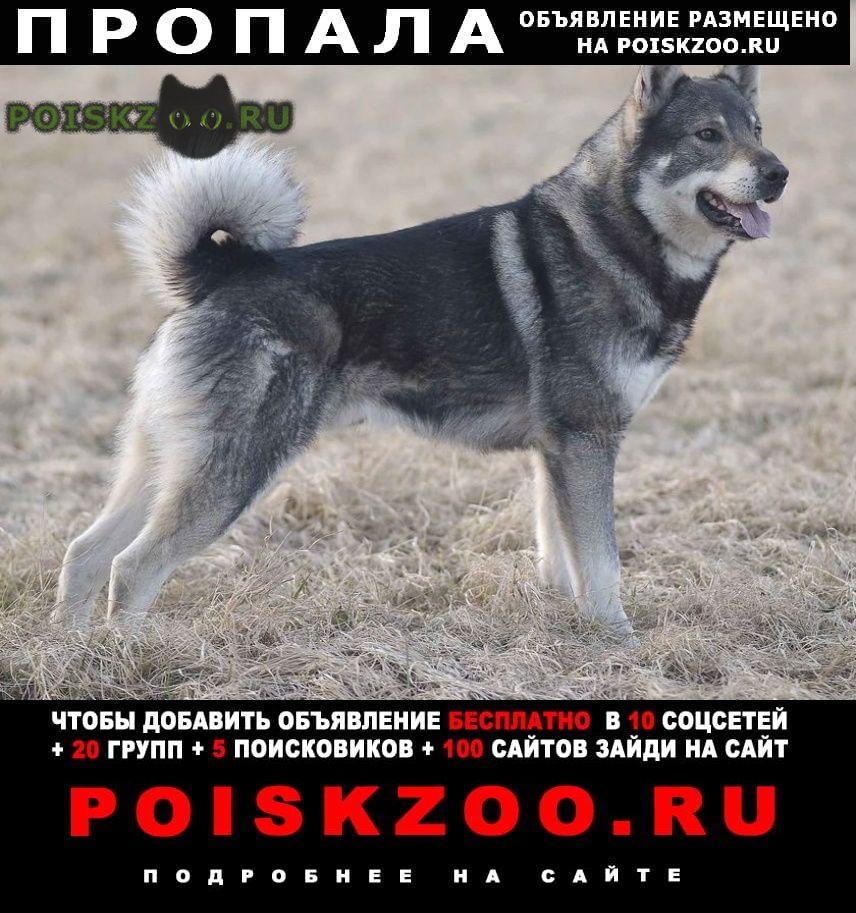 Пропала собака кобель г.Месягутово