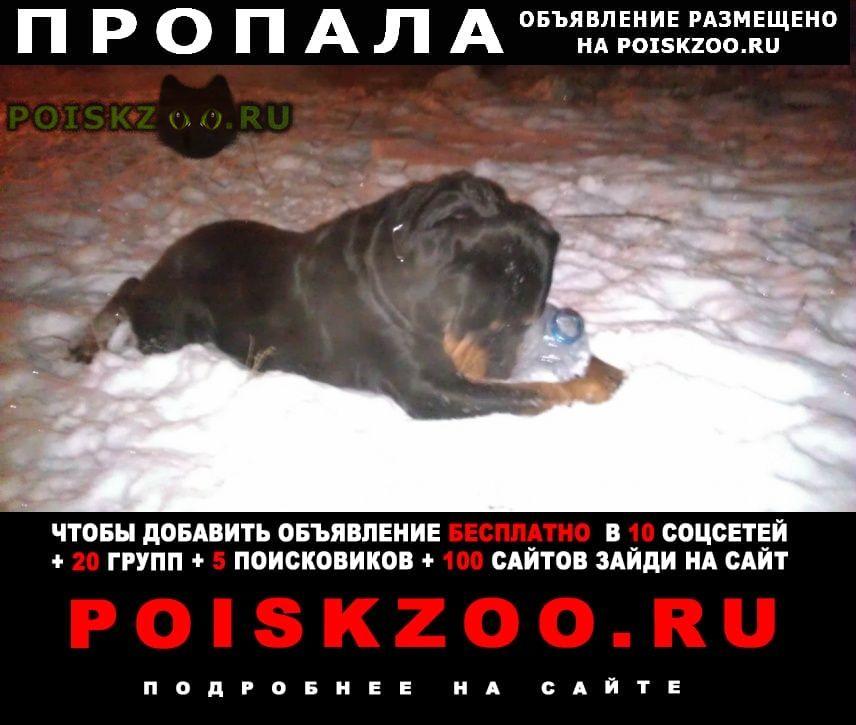Пропала собака г.Сосновоборск (Красноярский край)