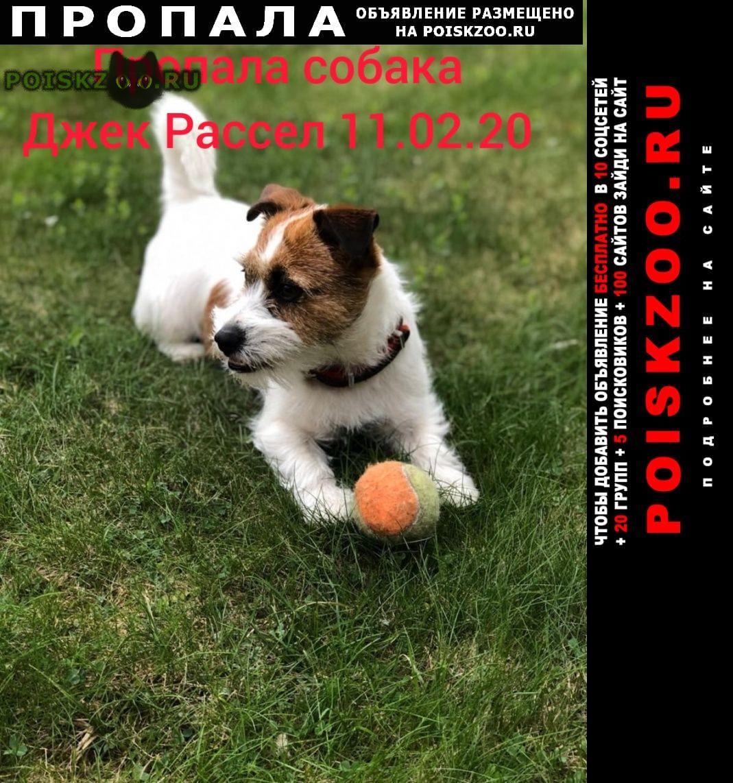 Пропала собака джек рассел г.Щелково